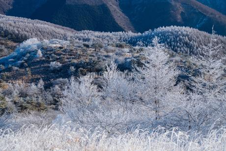 霧氷の世界の写真素材 [FYI04106433]