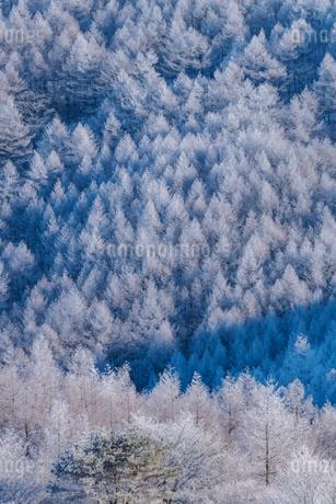 白い世界の写真素材 [FYI04106435]