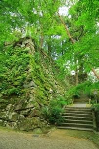 丹波亀山城跡の写真素材 [FYI04106557]