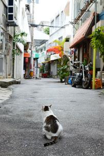 人気のない路地裏の猫の写真素材 [FYI04106668]