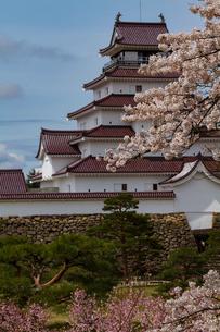 会津城の桜の写真素材 [FYI04106754]