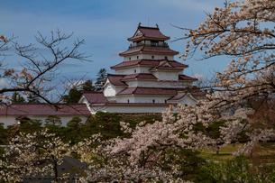 会津城の桜の写真素材 [FYI04106755]