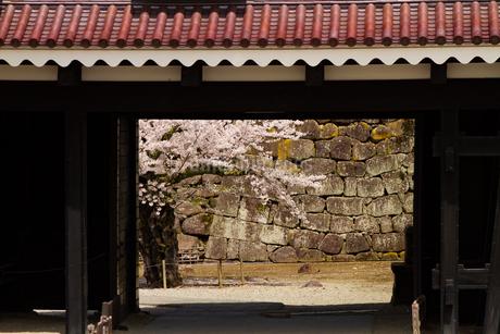 会津城の桜の写真素材 [FYI04106757]