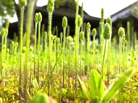 まっすぐ伸びている草の写真素材 [FYI04106931]