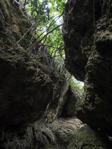 与那国島の自然の写真素材 [FYI04106993]