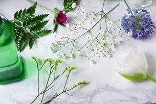 花の写真素材 [FYI04107112]
