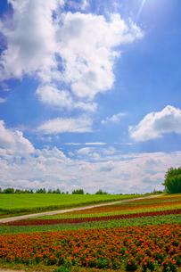 青空と花畑の写真素材 [FYI04107797]