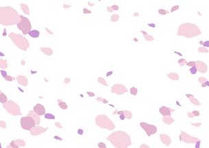 花吹雪(ピンク/線画無し)のイラスト素材 [FYI04107912]