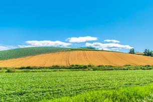 丘の向こうの青い空の写真素材 [FYI04107985]