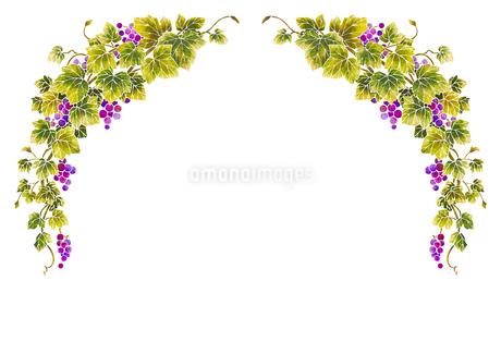 葡萄のイラストのフレーム(白線)のイラスト素材 [FYI04107996]
