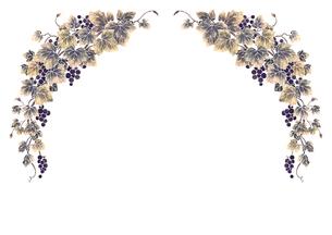 葡萄のイラストのフレーム(白線)のイラスト素材 [FYI04107997]