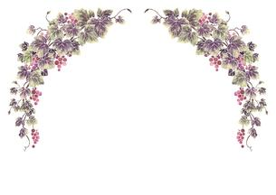 葡萄のイラストのフレーム(白線)のイラスト素材 [FYI04107998]