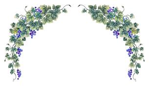 葡萄のイラストのフレーム(白線)のイラスト素材 [FYI04107999]