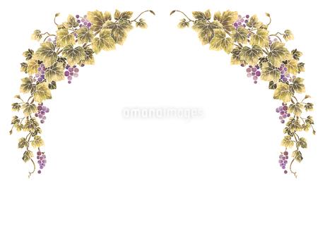 葡萄のイラストのフレーム(白線)のイラスト素材 [FYI04108000]