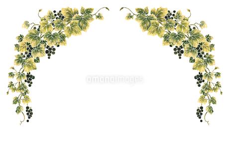 葡萄のイラストのフレーム(白線)のイラスト素材 [FYI04108001]