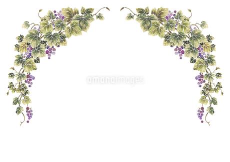 葡萄のイラストのフレーム(白線)のイラスト素材 [FYI04108002]