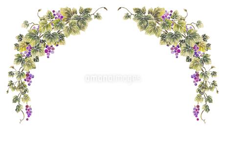 葡萄のイラストのフレーム(白線)のイラスト素材 [FYI04108003]