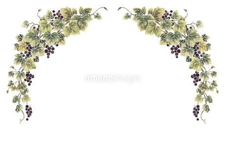 葡萄のイラストのフレーム(白線)のイラスト素材 [FYI04108004]