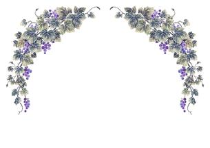 葡萄のイラストのフレーム(白線)のイラスト素材 [FYI04108005]