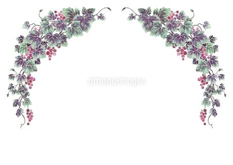 葡萄のイラストのフレーム(白線)のイラスト素材 [FYI04108006]