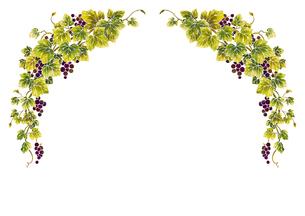 葡萄のイラストのフレーム(白線)のイラスト素材 [FYI04108007]
