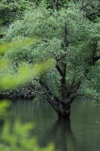 室生湖の写真素材 [FYI04108099]