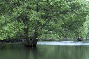 室生湖の写真素材 [FYI04108100]
