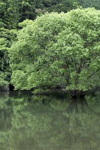 室生湖の写真素材 [FYI04108102]
