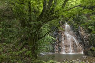 七品のカツラと一ツ滝の写真素材 [FYI04108113]