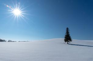 美しい北海道の風景 冬の美瑛町の写真素材 [FYI04108138]