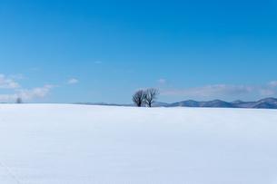 美しい北海道の風景 冬の美瑛町の写真素材 [FYI04108141]