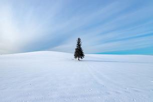 美しい北海道の風景 冬の美瑛町の写真素材 [FYI04108142]