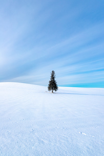 美しい北海道の風景 冬の美瑛町の写真素材 [FYI04108143]