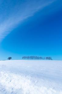 美しい北海道の風景 冬の美瑛町の写真素材 [FYI04108145]