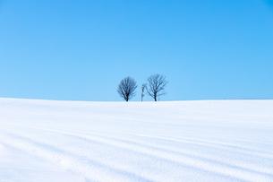 美しい北海道の風景 冬の美瑛町の写真素材 [FYI04108146]