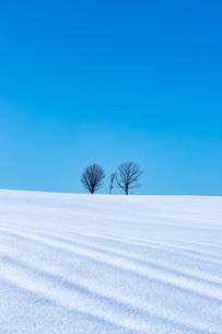 美しい北海道の風景 冬の美瑛町の写真素材 [FYI04108147]