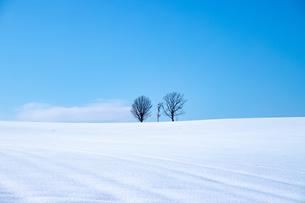 美しい北海道の風景 冬の美瑛町の写真素材 [FYI04108148]