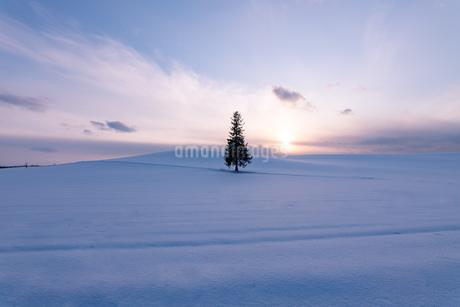 美しい北海道の風景 冬の美瑛町の写真素材 [FYI04108149]