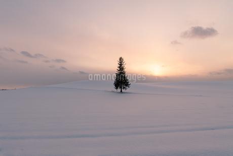 美しい北海道の風景 冬の美瑛町の写真素材 [FYI04108151]