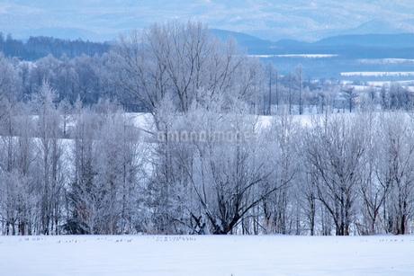 北海道の風景 美瑛町の樹氷の写真素材 [FYI04108154]