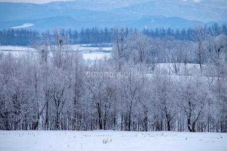 北海道冬の風景 美瑛町の樹氷の写真素材 [FYI04108155]