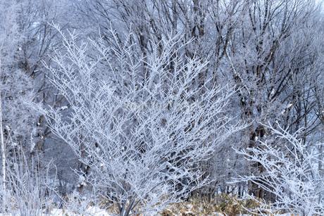 北海道冬の風景 美瑛町の樹氷の写真素材 [FYI04108156]