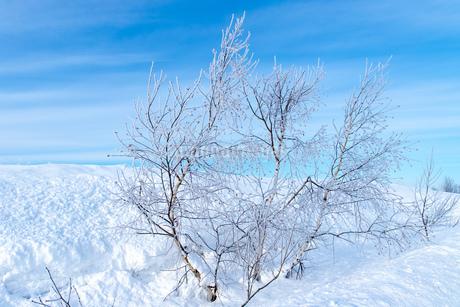 北海道冬の風景 美瑛町の樹氷の写真素材 [FYI04108158]
