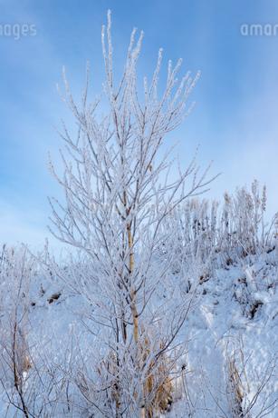 北海道冬の風景 美瑛町の樹氷の写真素材 [FYI04108159]