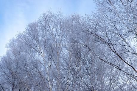 北海道冬の風景 美瑛町の樹氷の写真素材 [FYI04108164]