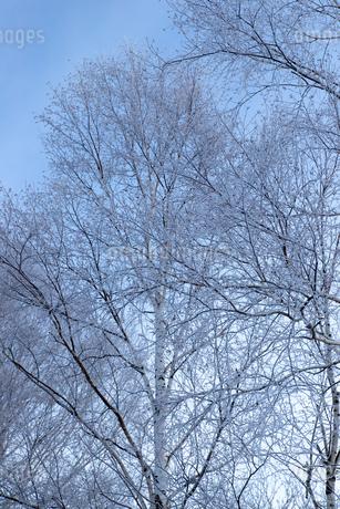 北海道冬の風景 美瑛町の樹氷の写真素材 [FYI04108165]