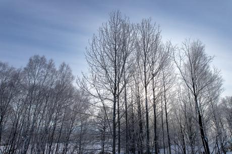 北海道冬の風景 美瑛町の樹氷の写真素材 [FYI04108168]