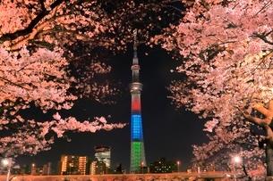 東京スカイツリーと隅田川のサクラの夜景の写真素材 [FYI04108208]
