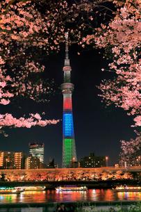 東京スカイツリーと隅田川のサクラの夜景の写真素材 [FYI04108209]