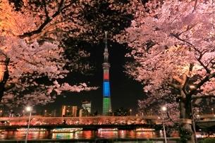 東京スカイツリーと隅田川のサクラの夜景の写真素材 [FYI04108210]